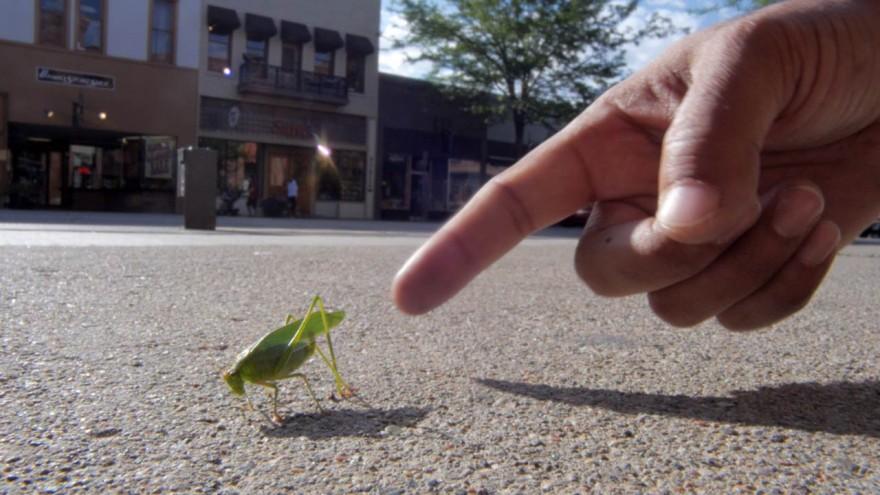 Cricket in Durango