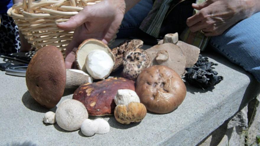 Mushrooms, Colorado